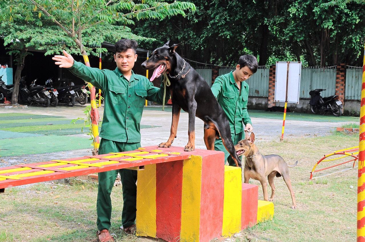 Trường huấn luyện chó cảnh uy tín hàng đầu tại Tphcm